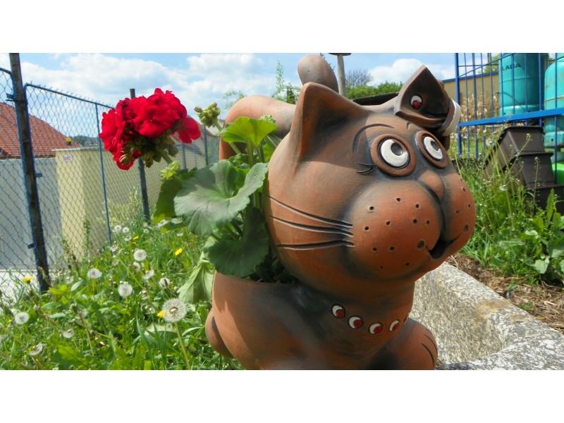 Květník kočka.